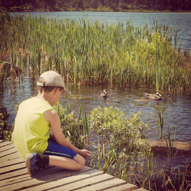 Instagram των νέων ταΐζοντας παπιών αγοριών από το χέρι του στοκ εικόνες με δικαίωμα ελεύθερης χρήσης