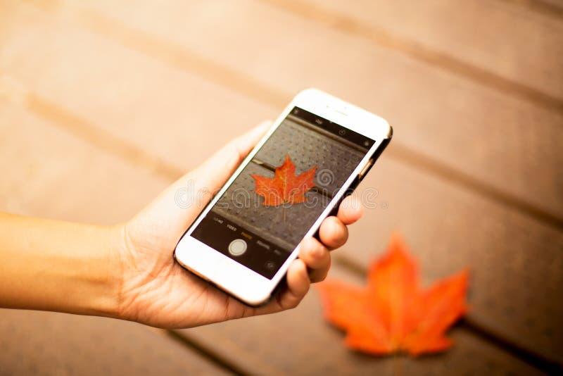 Instagram blogging begrepp handinnehavtelefon och tafoto av den röda lönnlövet under nedgånghöst arkivfoto