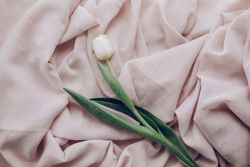 Instagram spring flat lay. stylish white tulip on beige soft fab royalty free stock photography