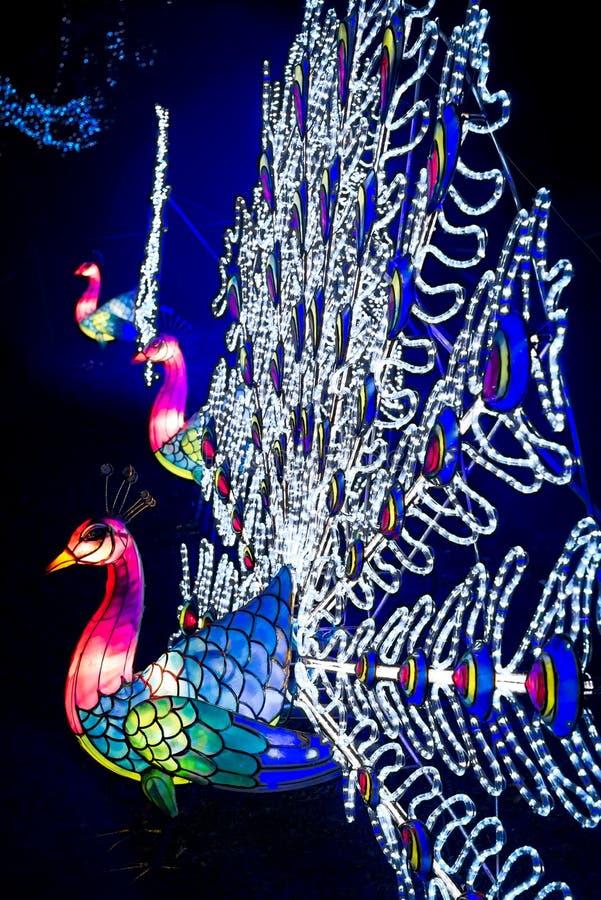A instalação de lanternas coloridas do pavão na casa de Chiswick e foto de stock
