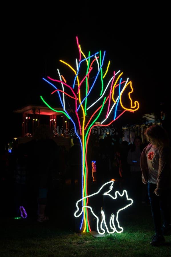A instalação de néon da arte do parque do cão na noite branca Geelong em Austrália fotografia de stock