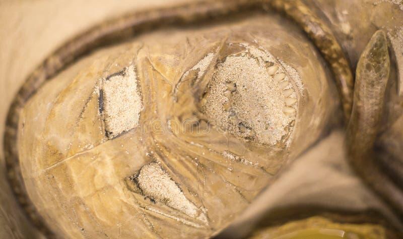 Instalación de la cabeza antigua de la momia fotos de archivo libres de regalías