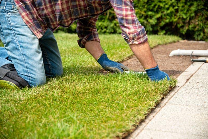 Installando il tappeto erboso arriva a fiumi il giardino immagini stock