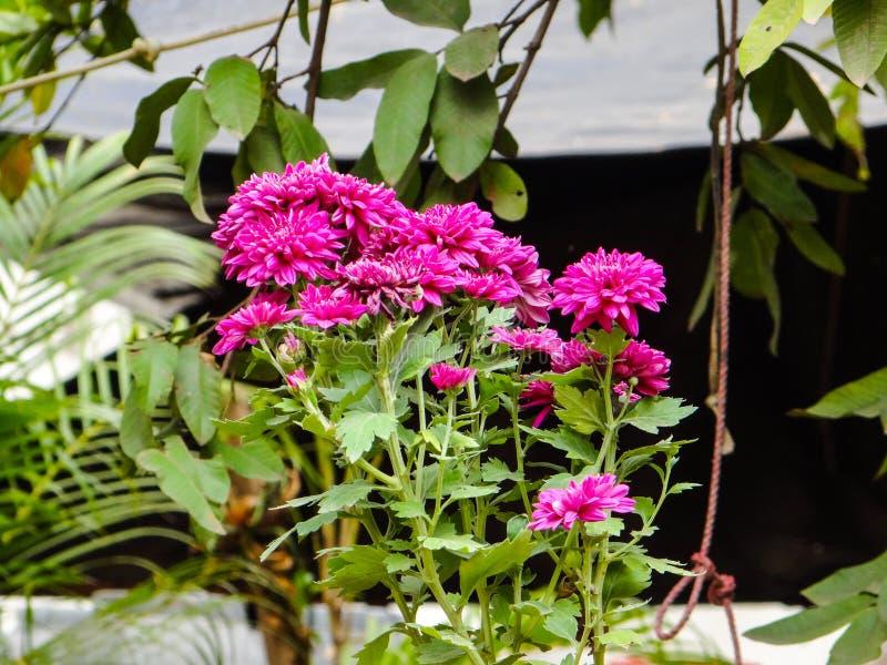 Installatie en bloemen royalty-vrije stock foto's