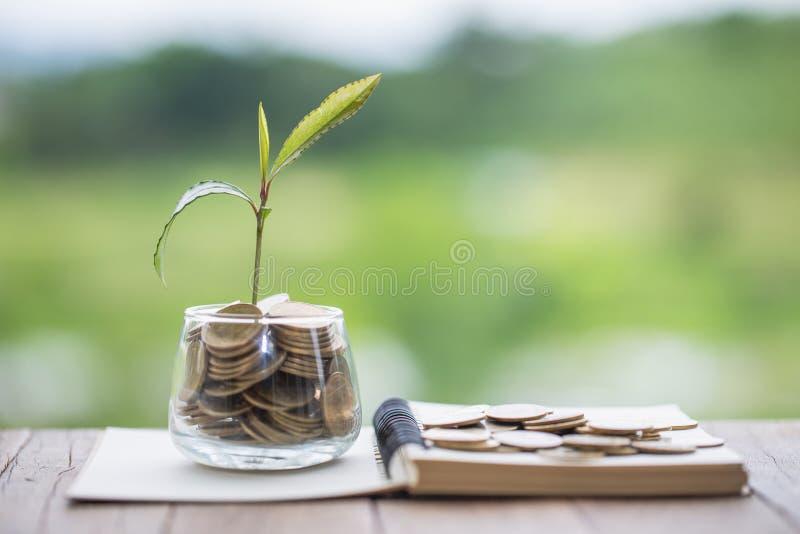 Installatie het groeien in de kruik van het Muntstukkenglas voor financi?le geldbesparing en investering, concept voor zaken, inn royalty-vrije stock foto