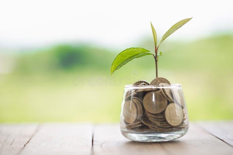 Installatie het groeien in de kruik van het Muntstukkenglas voor financi?le geldbesparing en investering, concept voor zaken, inn royalty-vrije stock afbeelding