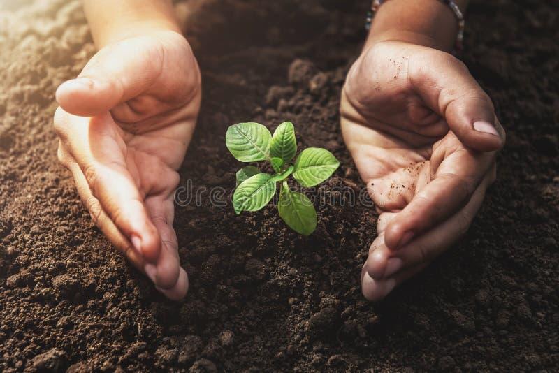 installatie het groeien met handbescherming en zonneschijn in tuin Conce royalty-vrije stock afbeelding