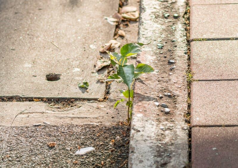 Installatie het groeien op straatbeton, het concept van de het levensoverlevende stock afbeeldingen