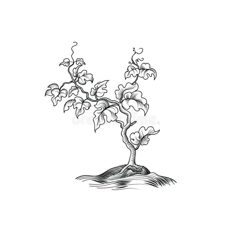 Installatie met bladeren het graveren De decoratieve groei van de druivenboom Bonsa vector illustratie