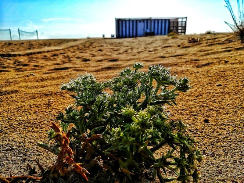 Installatie op het strand royalty-vrije stock fotografie