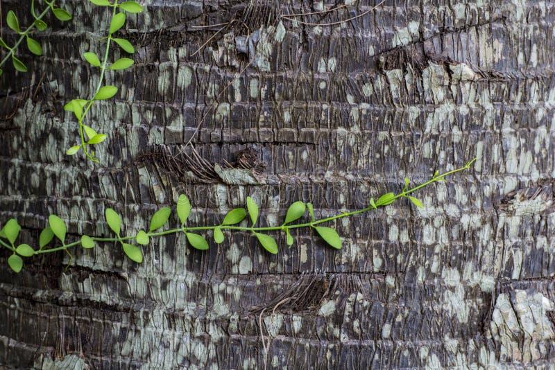 Installatie op kokospalm stock foto's