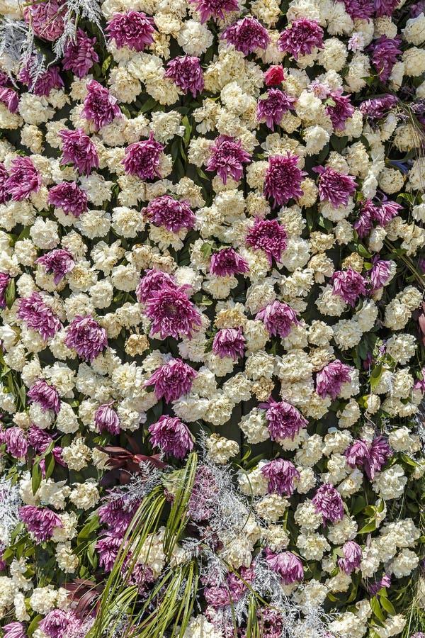 Installatie van kruidnagels en chrysanten op een bloemfestival i stock fotografie