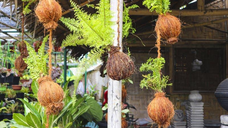 Installatiecontainer van kokosnotenschil in de tuin royalty-vrije stock afbeelding