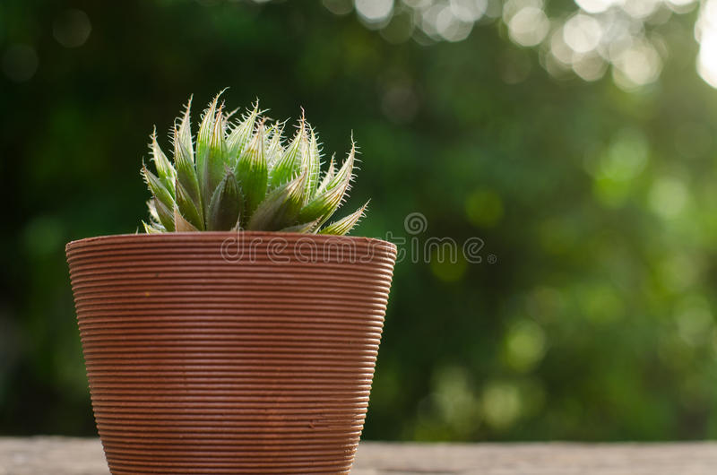 Installatiepot met cactus met groene achtergrond stock afbeelding