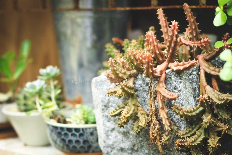 Installatiepotten van cement worden gemaakt die een kleurrijke cactusboom planten die stock afbeeldingen