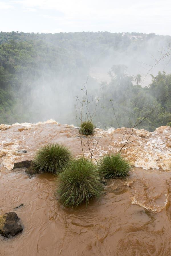 Installaties bij de rand van een waterval in iguazudalingen stock foto's