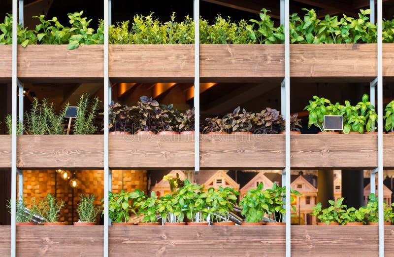 Installaties in bloempot op houten planken stock afbeelding