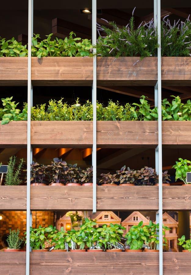 Installaties in bruine bloempot op een rij stock afbeeldingen