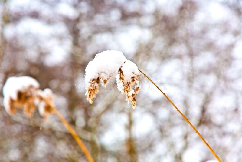 Installaties in de winterlandschap royalty-vrije stock fotografie