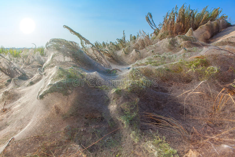 Installaties die door spiderweb worden behandeld royalty-vrije stock afbeeldingen