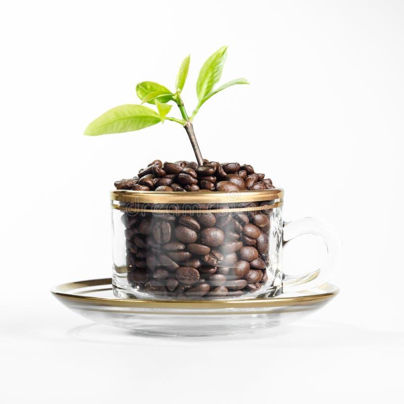 Installaties in een geïsoleerde koffiekop. stock foto's