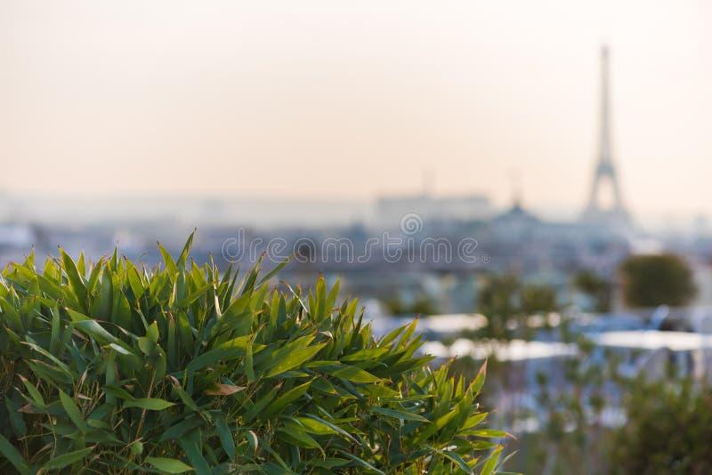 Installaties en vegetatie op een terras met de toren van Eiffel in bl royalty-vrije stock foto