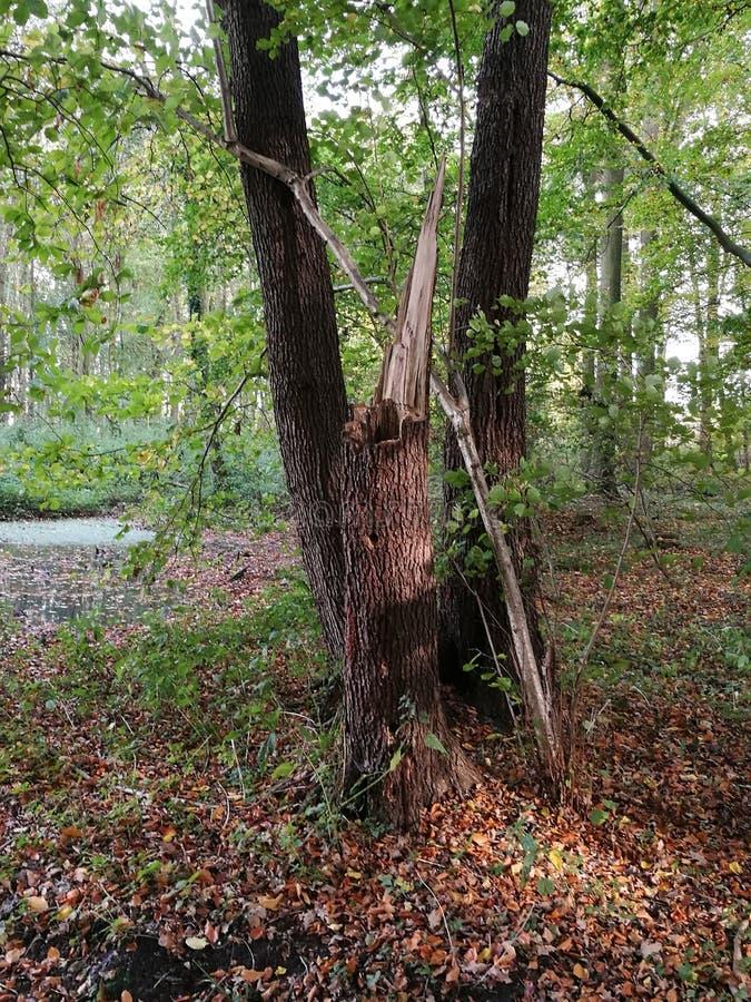Installaties Forrest stock fotografie