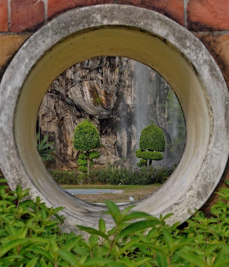 Installaties met kalksteenachtergrond royalty-vrije stock fotografie