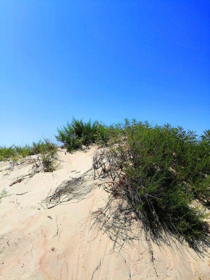 Installaties op het zand en tegen de hemel stock foto
