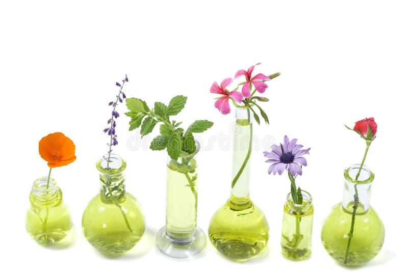 Installaties in reageerbuis en fles met geneeskrachtige bloemen binnen tegen witte achtergrond stock fotografie