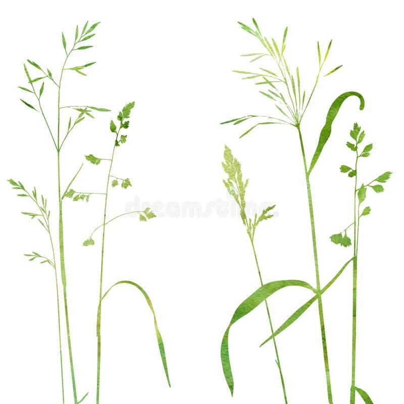 Installaties van het Wattercolor de wilde graangewas royalty-vrije illustratie