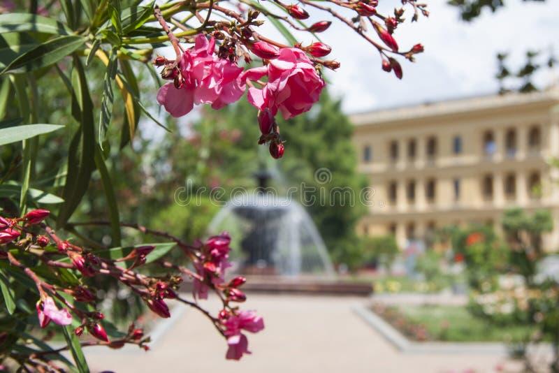 Installaties voor het tuinieren met zachte nadruk royalty-vrije stock afbeelding