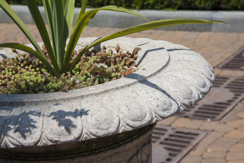 Installaties voor het tuinieren met zachte nadruk royalty-vrije stock foto's
