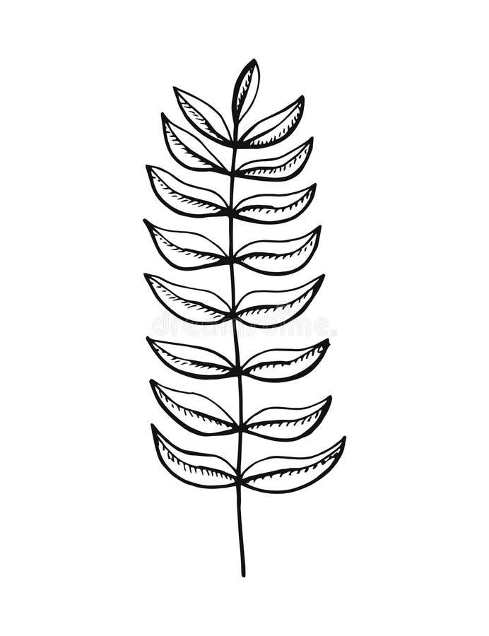 Installatietakje met bladeren De tekening van de hand vector illustratie