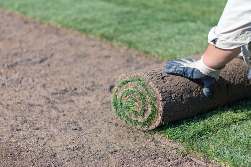 Installation de la nouvelle pelouse image stock