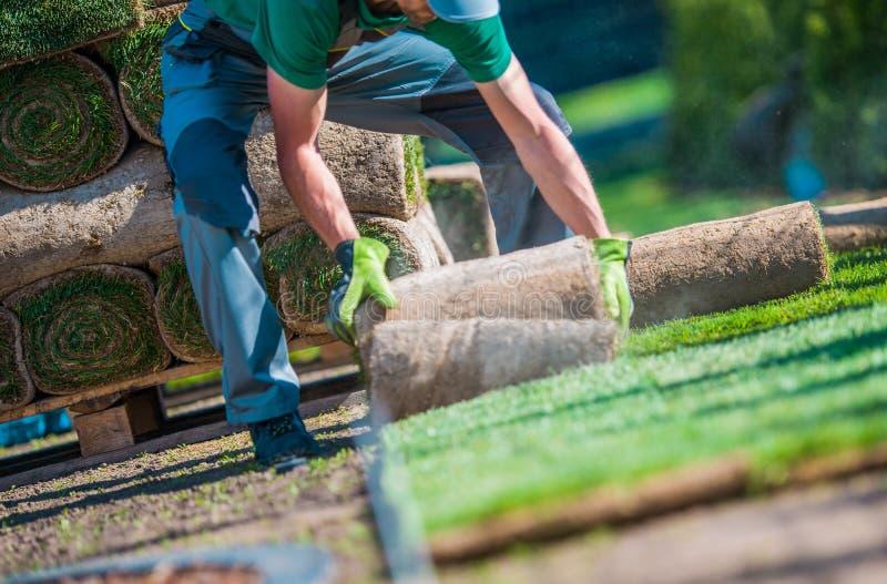 Installation of Grass Turfs stock image