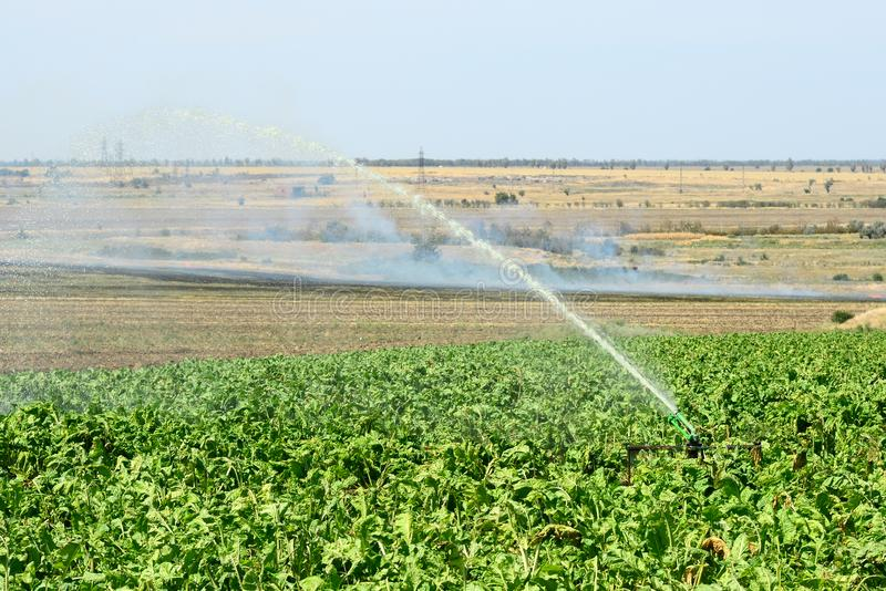 Installation of irrigation system in the field, water sprinkler in function of watering of agricultural plants. stock photo
