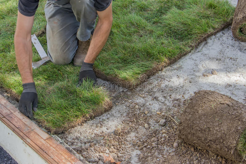 Installing sod 2. Installing sod, lawn and sod Installation. Selective focus stock image