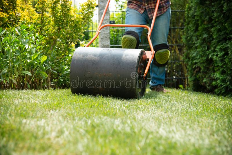 Installing turf rolls in the garden stock photography