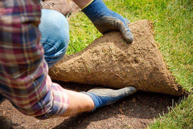 Instalować muraw rolki w ogródzie zdjęcia royalty free