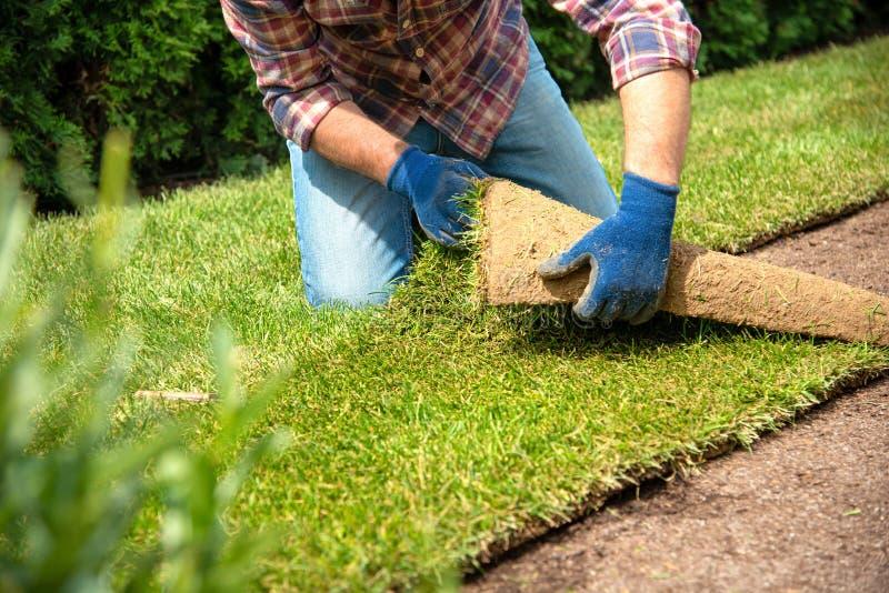 Instalować muraw rolki w ogródzie zdjęcie royalty free