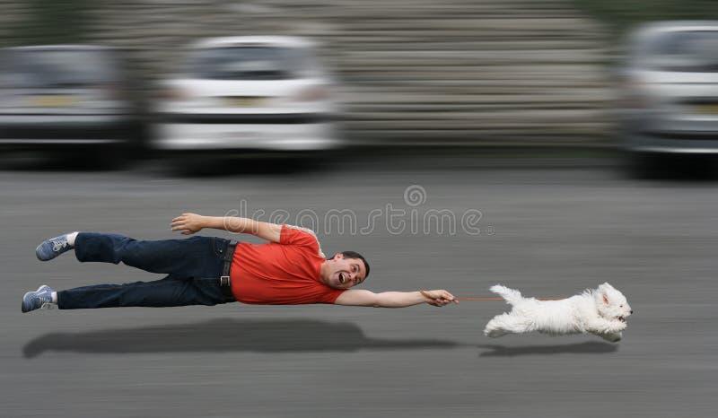 Instrução canina