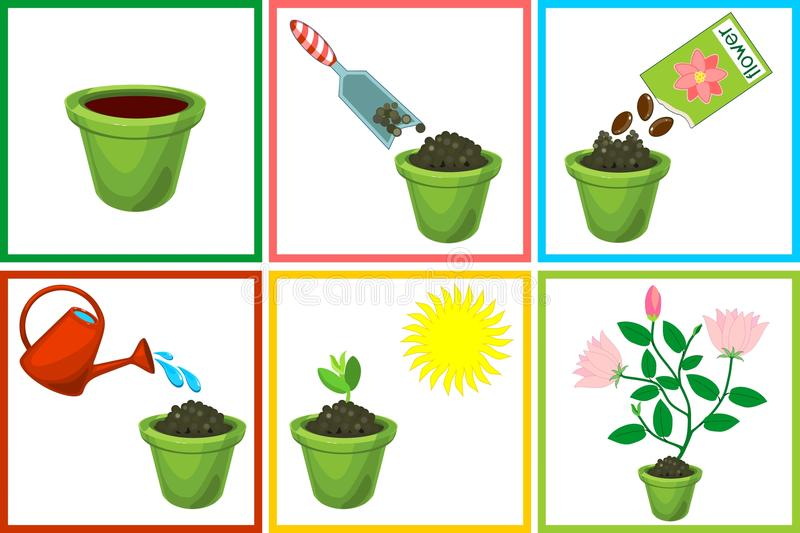 Instructies op hoe te om bloem in zes stappen te planten Stap voor stap royalty-vrije illustratie