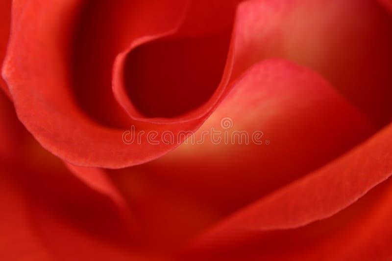 Instruction-macro d'abrégé sur rose de rouge photo libre de droits