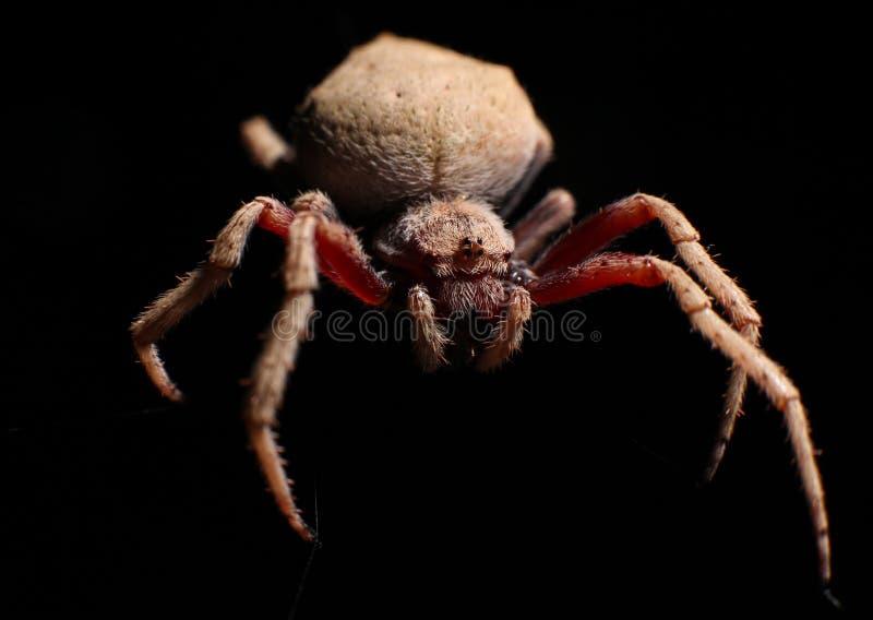 Instruction-macro d'araignée photos stock