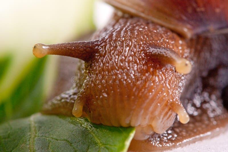 Instruction-macro d'escargot photos stock