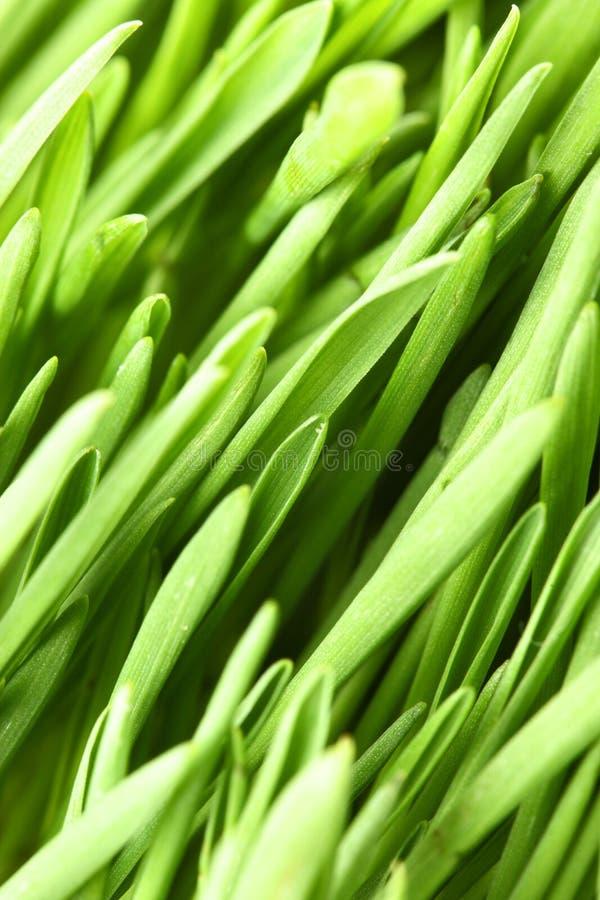 Instruction-macro d'herbe verte photo libre de droits