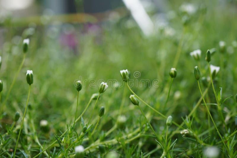 Instruction-macro d'herbe verte images libres de droits
