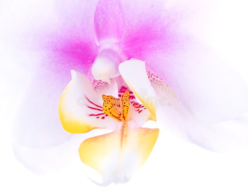 Instruction-macro d'orchidée photographie stock