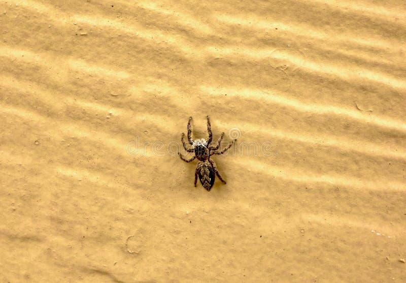 Download Instruction-macro D'une Araignée Branchante De Brown Image stock - Image du animal, brun: 87704057